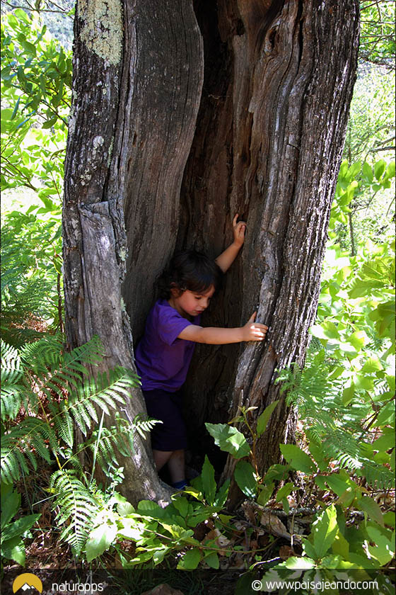 Árbol cueva en paisajeando (© www.paisajeando.com)