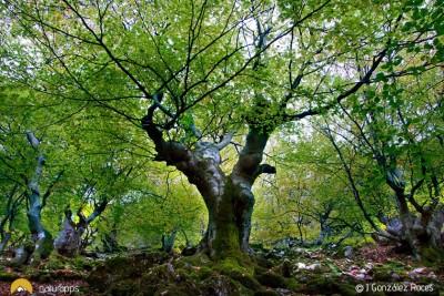 5 frescos bosques a los que escapar del calor este verano